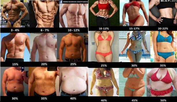 Body Fat Levels
