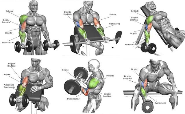 Biceps-Workout